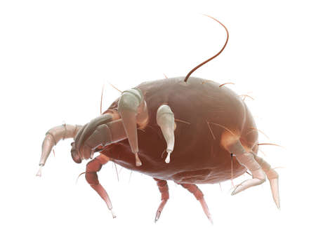 3d rendered illustration of a house dust mite Stok Fotoğraf