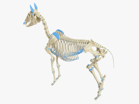 3d rendered medically accurate illustration of the horse skeleton 写真素材