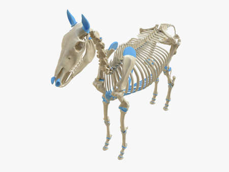 3d rendered medically accurate illustration of the horse skeleton Stock Photo
