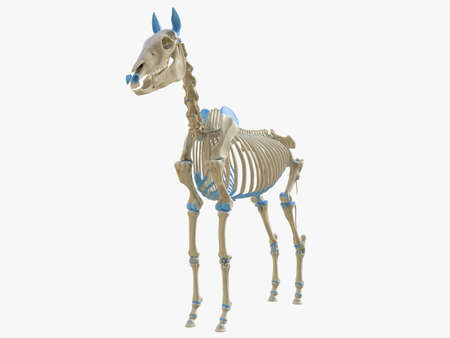 3d rendered medically accurate illustration of the horse skeleton Stok Fotoğraf