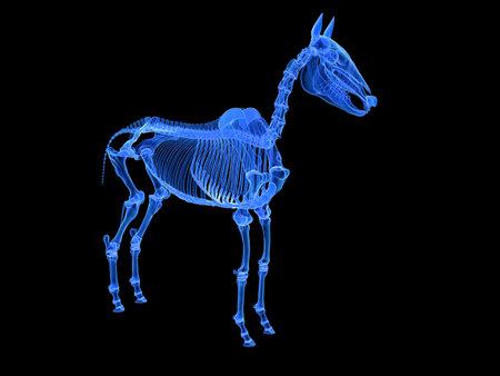 3d rendered medically accurate illustration of the horse skeleton Standard-Bild - 119082768
