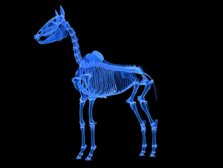 3d rendered medically accurate illustration of the horse skeleton Standard-Bild - 119082890