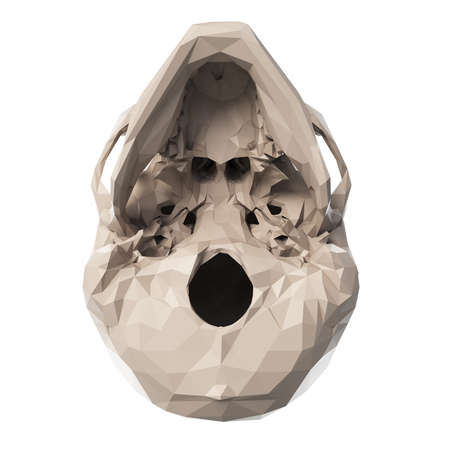 3d rendered medically accurate illustration of poly style skull