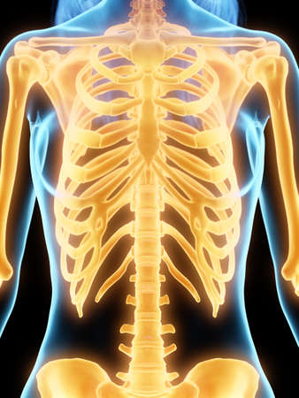 3d rendered medically accurate illustration of the female skeleton