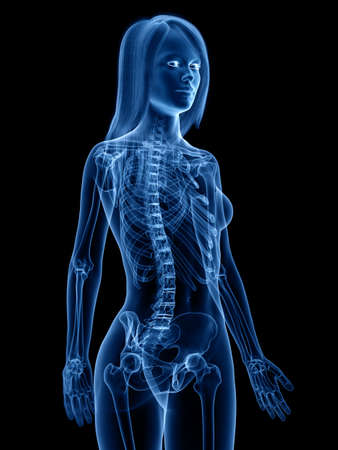 3d rendered medically accurate illustration of the skeletal Stock Photo