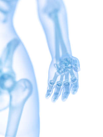 3d rendered medically accurate illustration of the skeletal hand