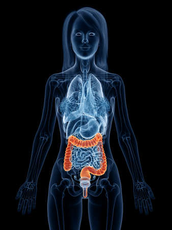 3d rendered medically accurate illustration of a womans large intestine Stock Illustration - 119083507