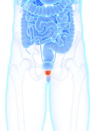 3d rendered medically accurate illustration of a mans prostate