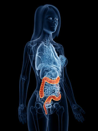 3d rendered medically accurate illustration of a womans large intestine Stock Illustration - 119081938