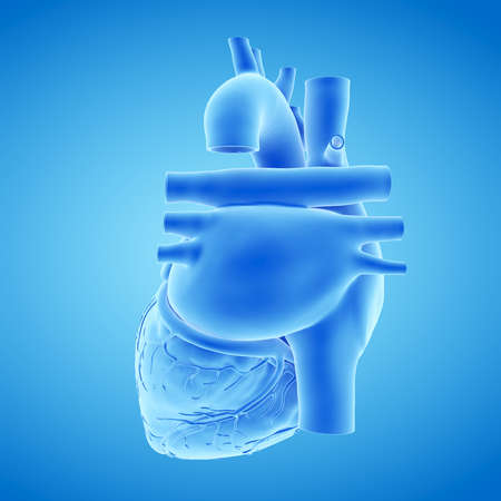 3d rendered medically accurate illustration of a blue human heart