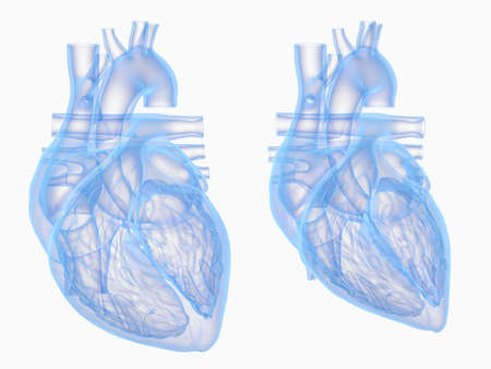 3d rendered medically accurate illustration of the heart in diastole and systole