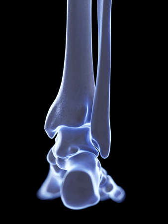 3d rendered medically accurate illustration of the ankle joint Stock Photo