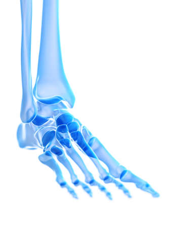 3d rendered medically accurate illustration of the ankle joint Stock Illustration - 119526040