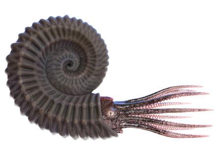 3d rendered illustration of an Ammonite Stock Photo