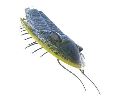 3d rendered illustration of a Trilobite