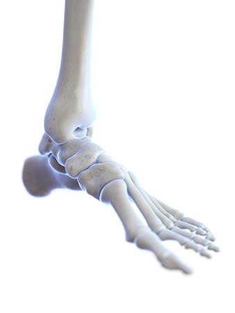 3d rendered medically accurate illustration of the ankle joint Stock Illustration - 119526434