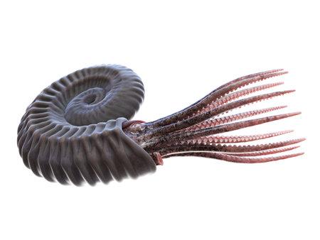 3d rendered illustration of an Ammonite