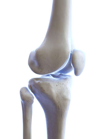 3d rendered medically accurate illustration of the knee joint