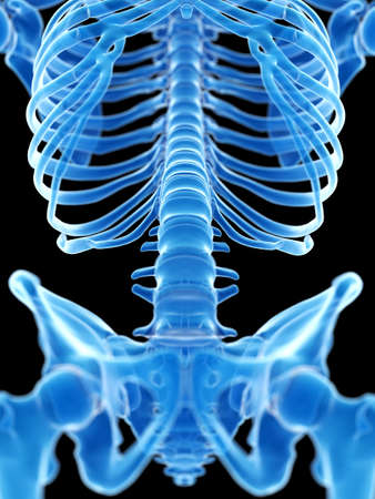3d rendered medically accurate illustration of the lumbar spine Stock Photo