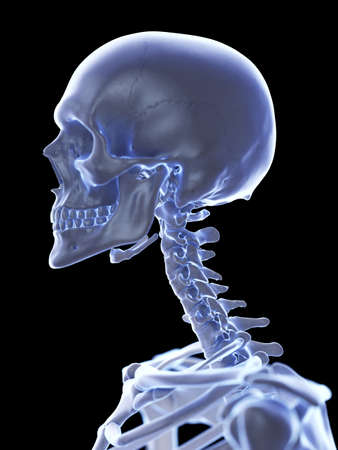 3d rendered medically accurate illustration of the cervical spine Stock Photo