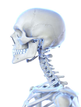 3d rendered medically accurate illustration of the cervical spine
