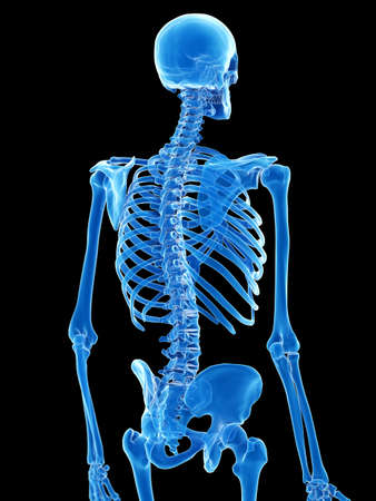 3d rendered medically accurate illustration of the skeletal thorax