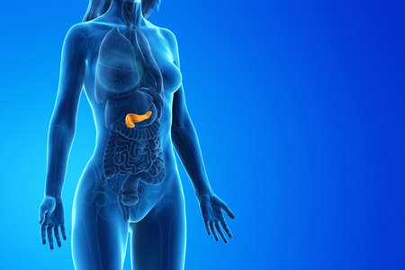 3d rendered medically accurate illustration of a womans pancreas