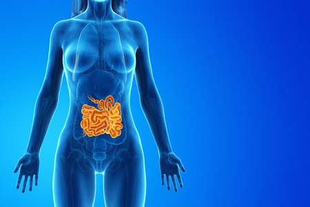 3d rendered medically accurate illustration of a womans small intestine Foto de archivo - 120280741