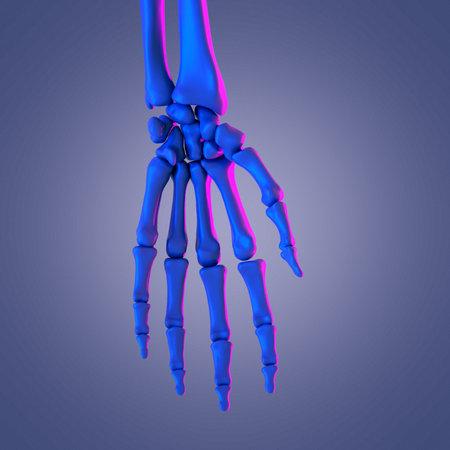 3d rendered abstract rendering of the hand bones Stock Photo