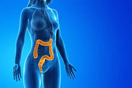 3d rendered medically accurate illustration of a womans colon