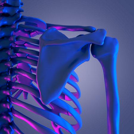 3d rendered abstract rendering of the skeletal shoulder