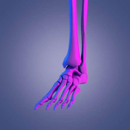3d rendered abstract rendering of the foot