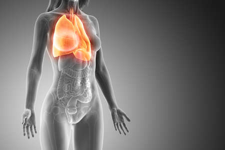 3d rendered medically accurate illustration of a womans lung Foto de archivo