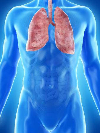 3d rindió la ilustración médicamente exacta del pulmón de un hombre