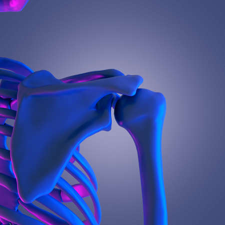 3d rendered abstract rendering of the skeletal shoulder