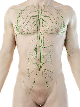 3d rendered medically accurate illustration of a mans lymphatic system