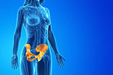 3d rendered medically accurate illustration of a womans hip Stock Photo