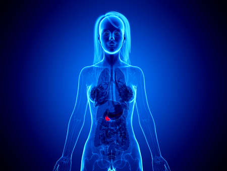 3d rendered medically accurate illustration of a womans pancreas Foto de archivo - 120282261