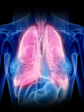 3d rendered medically accurate illustration of a womans lung Stock Photo