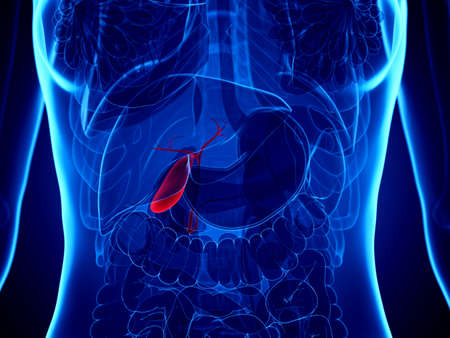3d rendered medically accurate illustration of a womans gallbladder