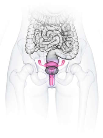 3d rendered medically accurate illustration of a womans uterus