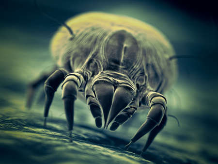 3d rendered illustration of a house dust mite Archivio Fotografico