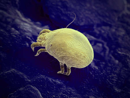 3d rendered illustration of a house dust mite Stock Photo