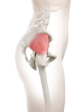 3d rendered medically accurate illustration of a womans Gluteus Minimus Stock Photo