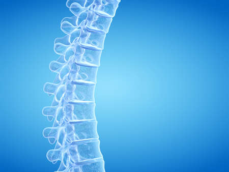 3d rendered medically accurate illustration of the human spine Stok Fotoğraf