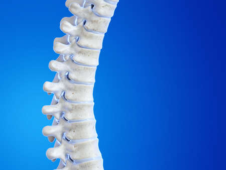 3d rendered medically accurate illustration of the human spine Reklamní fotografie - 121282527