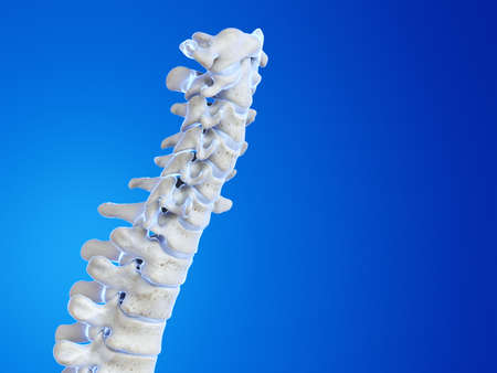 3d rendered medically accurate illustration of the human spine Stock fotó