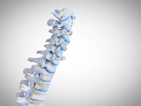 3d rindió la ilustración médicamente exacta de la columna vertebral humana Foto de archivo