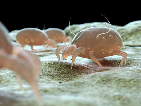 3d rendered medically accurate illustration of a dust mite Reklamní fotografie