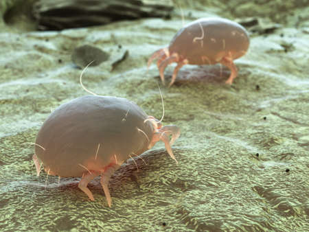 3d rendered medically accurate illustration of a dust mite Stock Photo